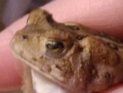 Name:  toad3.jpg Views: 40 Size:  30.3 KB