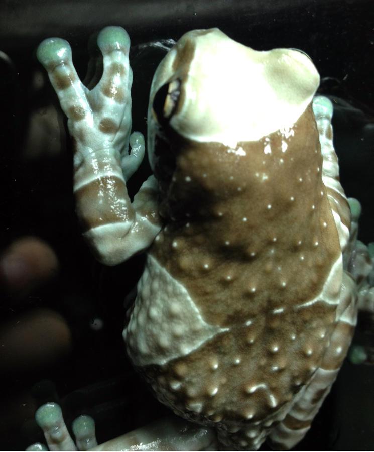 Name:  frog1.jpg Views: 238 Size:  73.9 KB