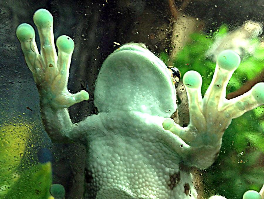 Name:  frog3.jpg Views: 187 Size:  129.6 KB