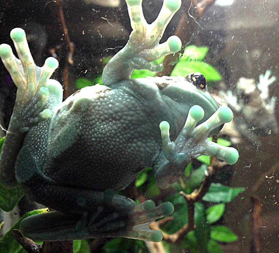 Name:  frog4.jpg Views: 384 Size:  144.9 KB