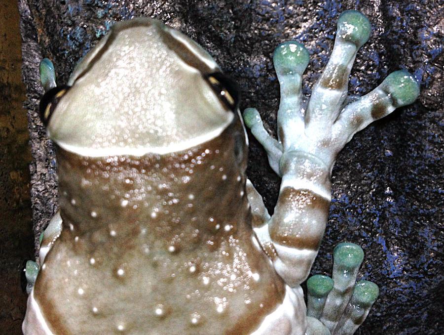 Name:  frog6.jpg Views: 146 Size:  158.2 KB