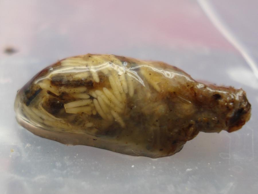 Name:  frogworm.jpg Views: 25206 Size:  36.5 KB