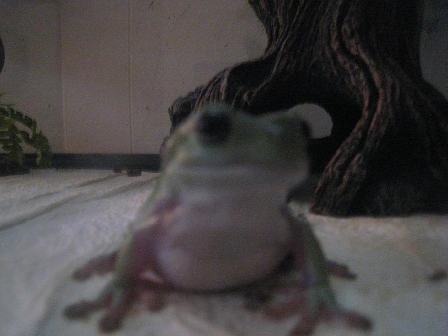 Name:  frog's (4).jpg Views: 245 Size:  59.1 KB