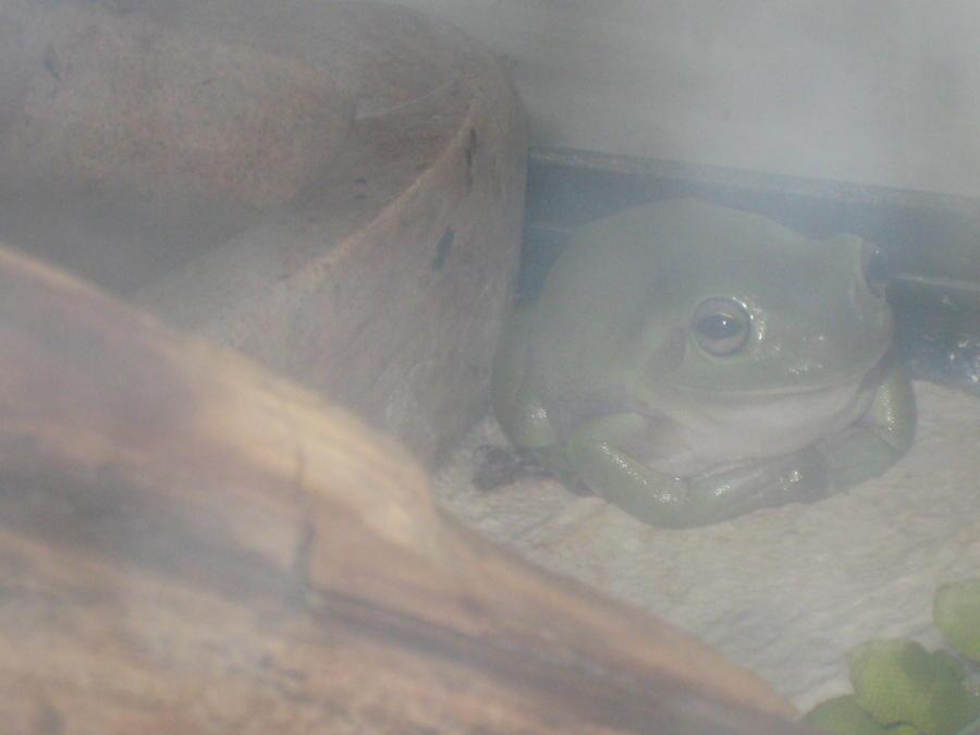 Name:  frog's (5).jpg Views: 228 Size:  31.5 KB