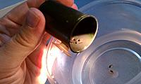 Removing some tadpoles and eggs from film container.