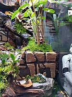 The Rainforest Exhibit...ancient ruins created by MAG.