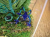 Beaded blue poison dart frog