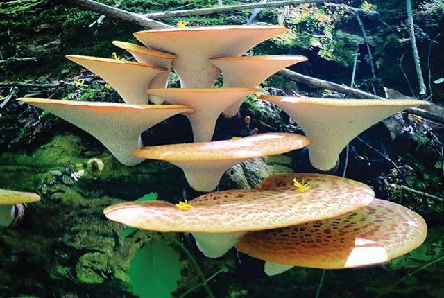 Name:  botany-187.jpg Views: 36 Size:  73.5 KB