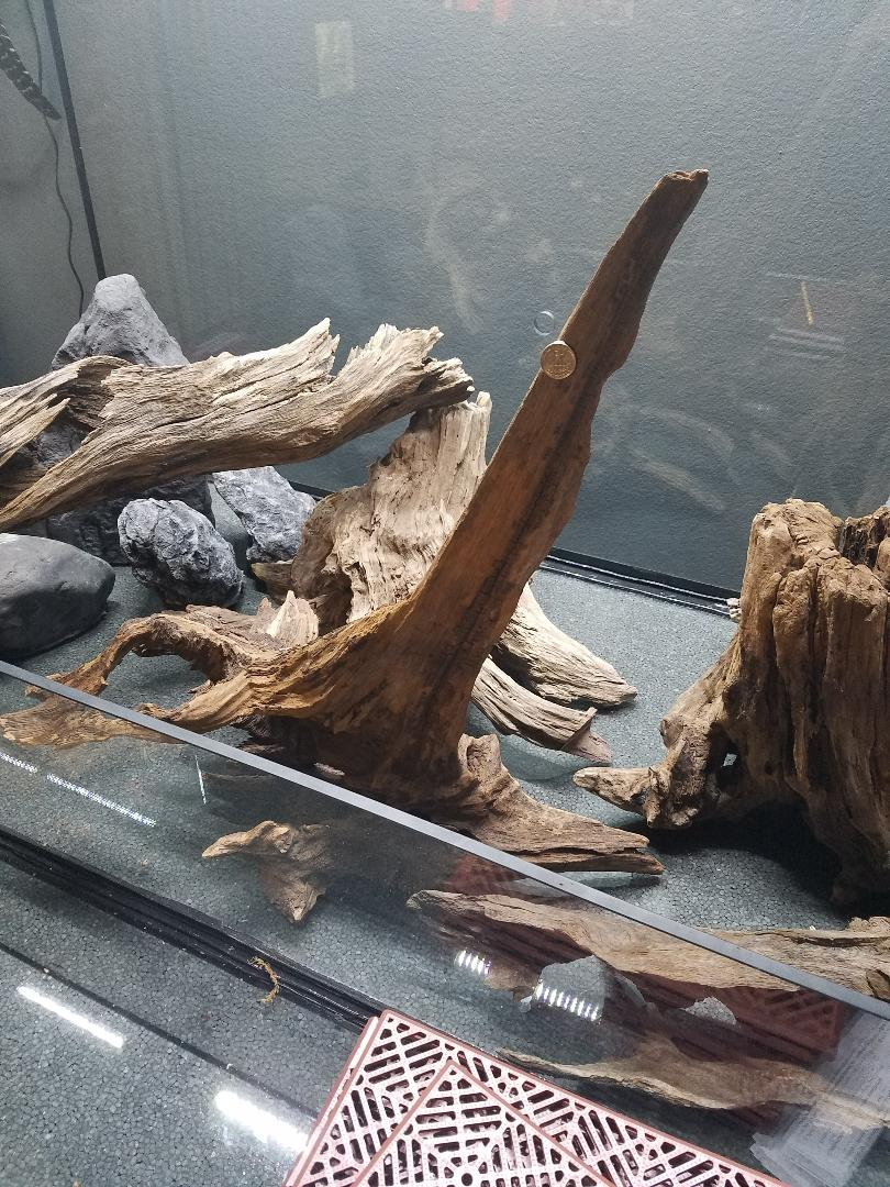 Name:  Driftwood 004.jpg Views: 17 Size:  204.4 KB