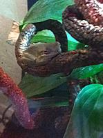 Viv #1 Inhabitants