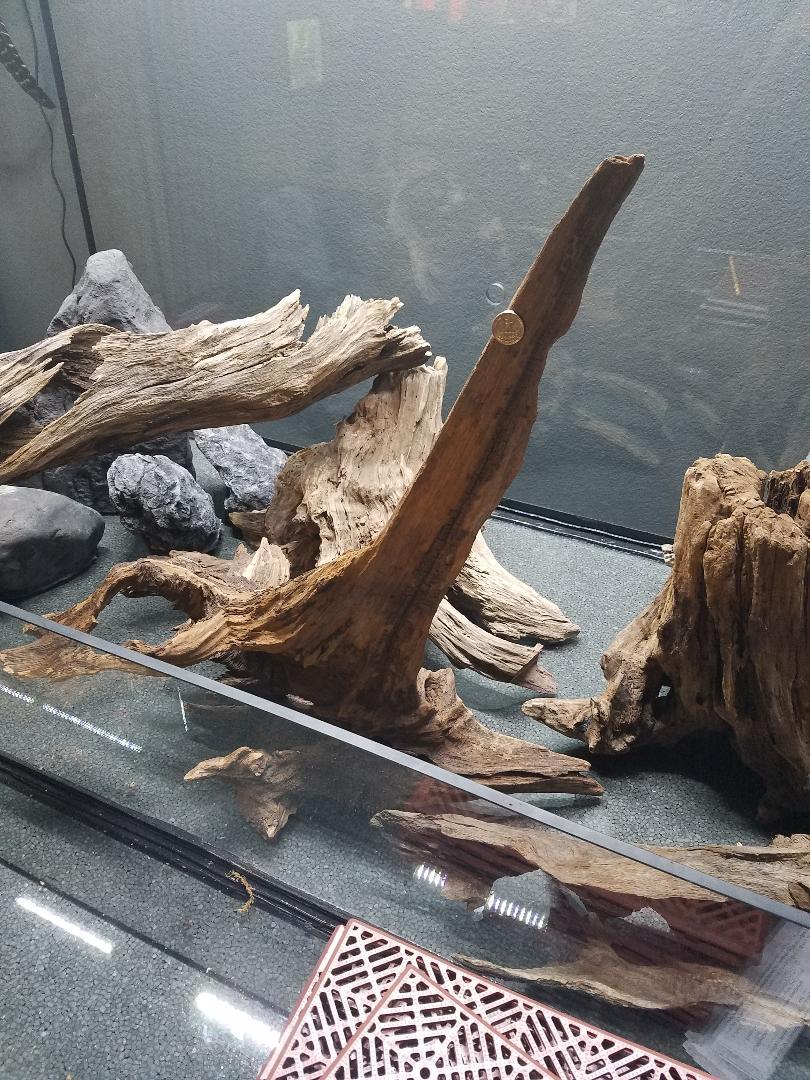 Name:  Driftwood 004.jpg Views: 65 Size:  204.4 KB