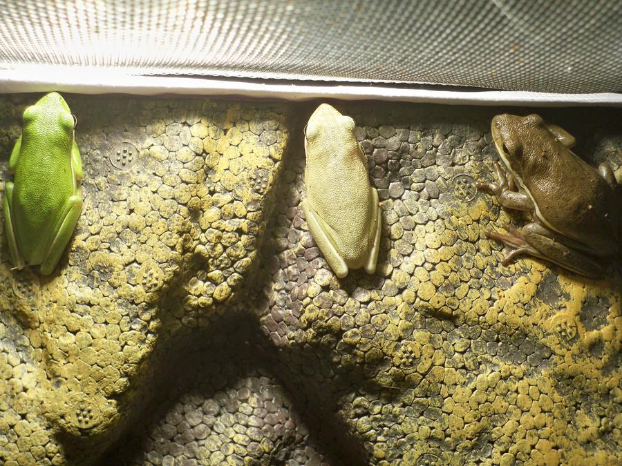 Name:  frog 032.jpg Views: 368 Size:  156.3 KB