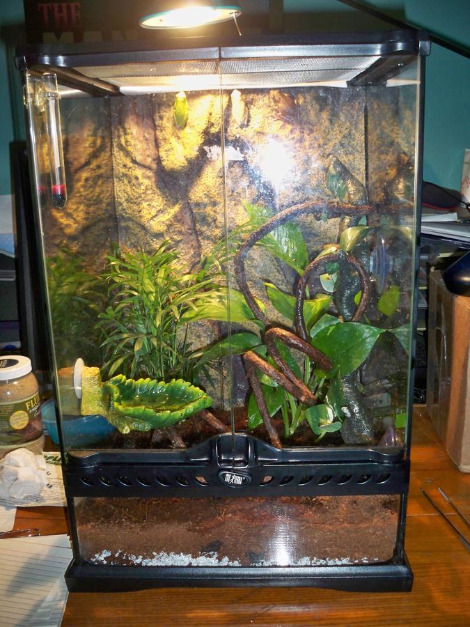 Name:  frog 034.jpg Views: 297 Size:  117.3 KB