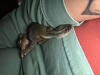 My twins pet Squirrel.