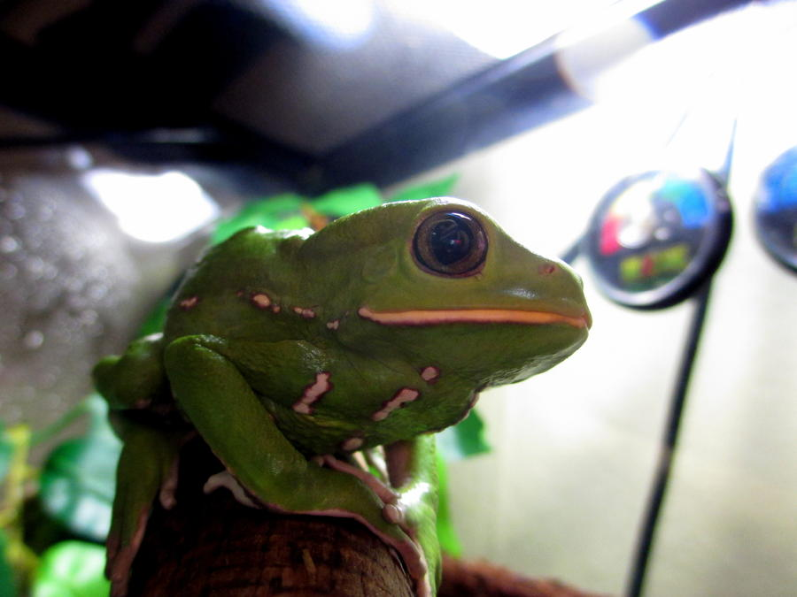 Name:  frog 1.jpg Views: 141 Size:  54.6 KB