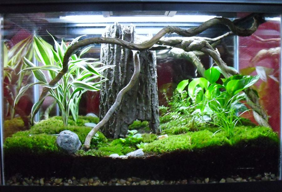 Name:  14904d1312756917-enclosure-month-competition-entries-august-2011-frog-habitat.jpg