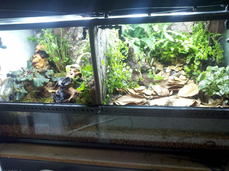 Name:  14939d1312835266-enclosure-month-competition-entries-august-2011-leuc-tank.jpg