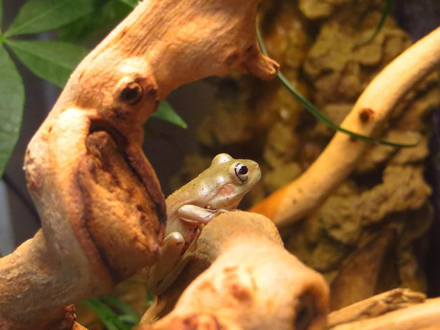 Name:  Frogs 4.jpg