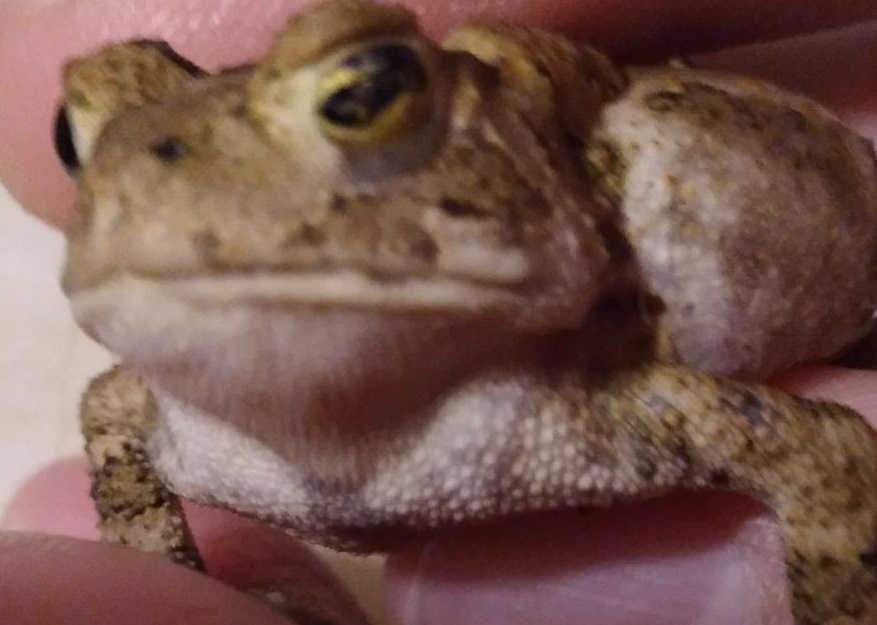 Name:  toad2.jpg Views: 50 Size:  115.4 KB
