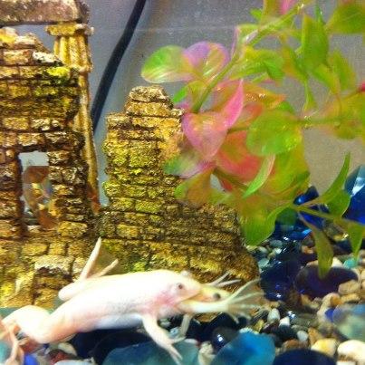 Name:  frog.jpg Views: 524 Size:  49.4 KB