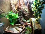 """Bridge Over Troubled Waters""    White's Tree Frogs (Luigi, Baudrillard, and the unnamed female) tank"