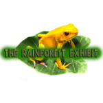 The Rainforest Exhibit's Avatar