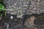 Larry Wardog's Avatar