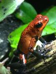 deranged chipmunk's Avatar