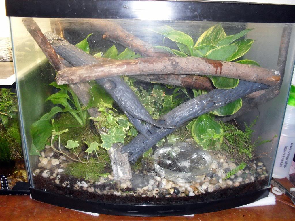 Tree Frog Aquarium Setup Best Accent Chairs And Aquarium