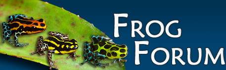 frogforum_logo_vb4_1.png